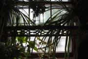 plantshelfsil
